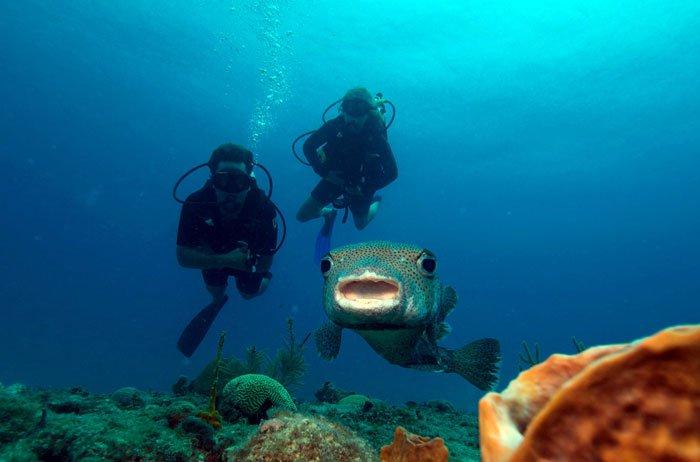 Scuba Diving saint martin