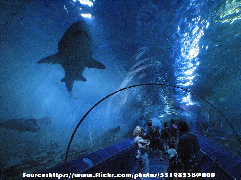 S.E.A. Aquarium, Singapore