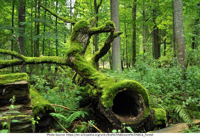 tourist attractions in poland Bialowieza Forest