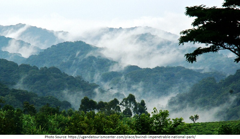 Tourist Attractions in Uganda, Bwindi Impenetrable National Park
