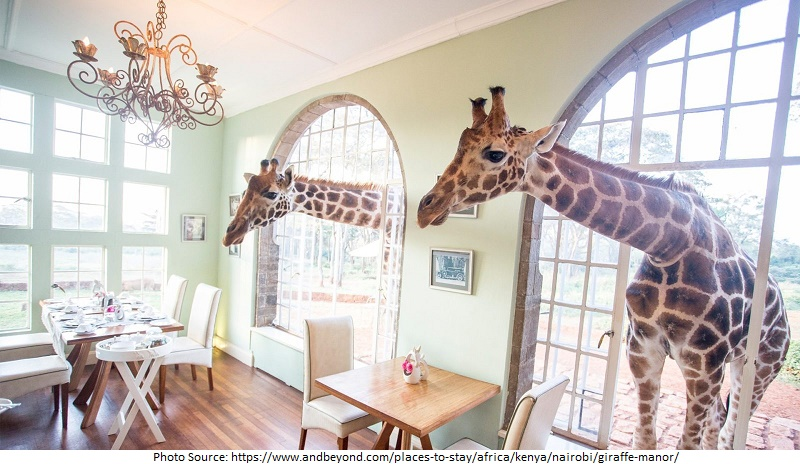 Giraffe Manor attractions