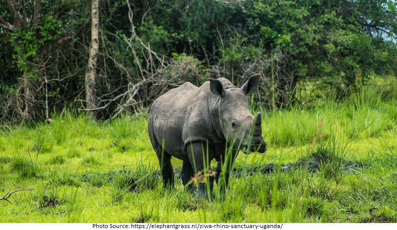Tourist Attractions in Uganda, Ziwa Rhino Sanctuary