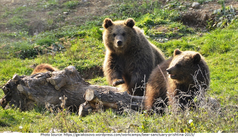 Tourist Attractions in Bear Sanctuary