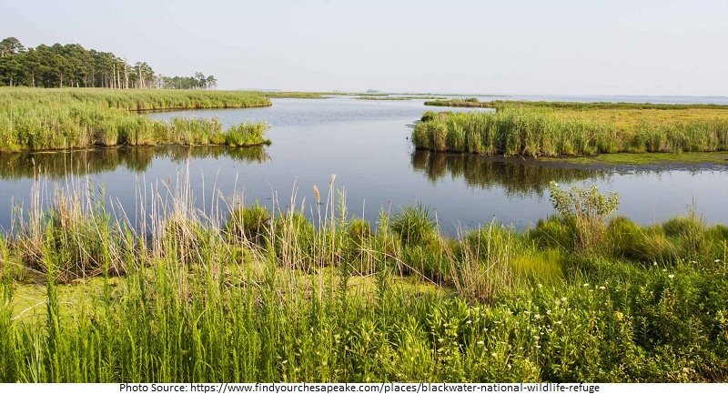 tourist attractions in Blackwater National Wildlife Refuge