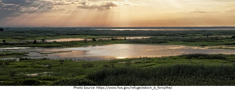tourist attractions in Edwin B. Forsythe National Wildlife Refuge