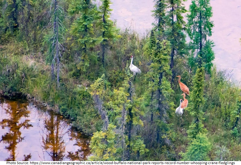 tourist attractions in Wood Buffalo National Park